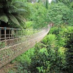 heligan 1 (2)